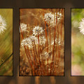 Dandelion Series by Jill Reger