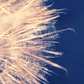 Dandelion Thirty One by LKB Art and Photography