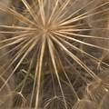 Dandelion Twenty One by LKB Art and Photography
