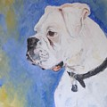 Danger The White Boxer by Veronica Coulston