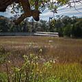 Daniel Island Expansive Salt Marsh by Dale Powell
