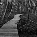 Daniel Webster Boardwalk IIi by Steven David Roberts