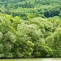 Danube Green by Bob Phillips