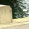 Danube River Swan by Ian  MacDonald