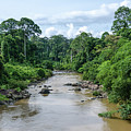 Danum Valley by Richard Parsons
