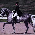 Dapple Grey Dressage by Rebecca Snyder