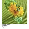Dappled Dawn, Dandelion, Thyme by Betsy Derrick