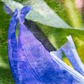 Dappled Petals by Arlene Carmel
