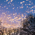 Dappled Sunset-1545 by Oonabot Photography