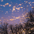 Dappled Sunset-1548 by Oonabot Photography