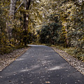 Dark Autumn by Scott Chimber