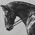 Dark Brown Dressage Horse Black And White by Crista Forest