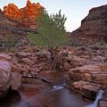 Dark Canyon Creek by Leland D Howard