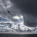 Dark Cloud by Robert Potts