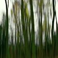 Dark Forest 3 by Esko Lindell