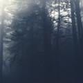 Dark Forest by Austin Howlett