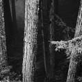 Dark Forest by Donna Blackhall