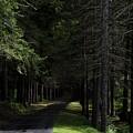 Dark Forest Road by Jake Donaldson