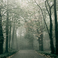 Dark Gloomy Alley In Woods by Arletta Cwalina