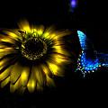 Dark Glow Butterfly by Bob Welch