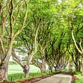 Dark Hedges, Game Of Thrones by Bob Cuthbert