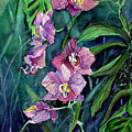 Dark Orchid by Mindy Newman