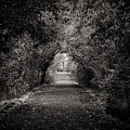 Dark Path In Black And White by Art Wager