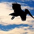 Dark Pelican by AJ Schibig