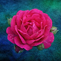 Dark Pink Rose by Sandy Keeton
