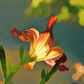 Dark Red Day Lily With Sun Shining Through I Abstract I by Linda Brody