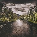Dark River Woods by Jorgo Photography - Wall Art Gallery