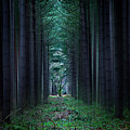 Dark Side Of Forest by Svetlana Sewell