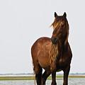 Dark Stallion by Bob Decker