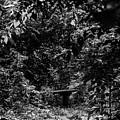 Dark Summer Woods by Edward Peterson