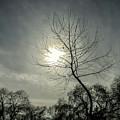 Dark Sunshine by Branislav Savev