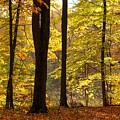 Dark Trunks Bright Leaves by Robin McLeod