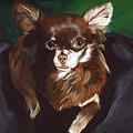 Darla Chihuahua  by Sara Stevenson