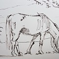 Dartmoor Horse Grazing Sketch by Mike Jory