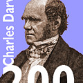 Darwin 200 Lilac by Steve Wyburn