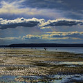 Dash Point State Park 2 by David Patterson