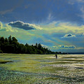 Dash Point State Park by David Patterson