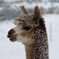 Dashing Through The Snow by Shari Nees