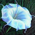 Datura Flower by Cheryl Fecht