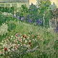 Daubigny's Garden by Vincent Van Gogh