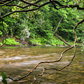 Davidson River by Chip Laughton
