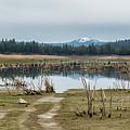 Davis Creek And Maiden Peak by Belinda Greb
