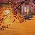 Dawn At The Jefferson Memorial by Susan Candelario