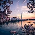 Dawn Blossoms by Joshua Lebenson
