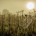 Dawn Dew by David Mckenna