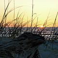 Dawn by Ed Waldrop